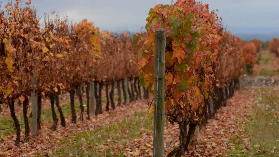 Adiós verano: Hoy comienza el otoño en el hemisferio sur