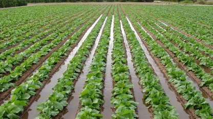 Nuevas medidas favorecen el riegro agrícola en la provincia