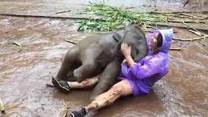 Sucedió en Tailandia durante una visita turística en una granja de elefantes.