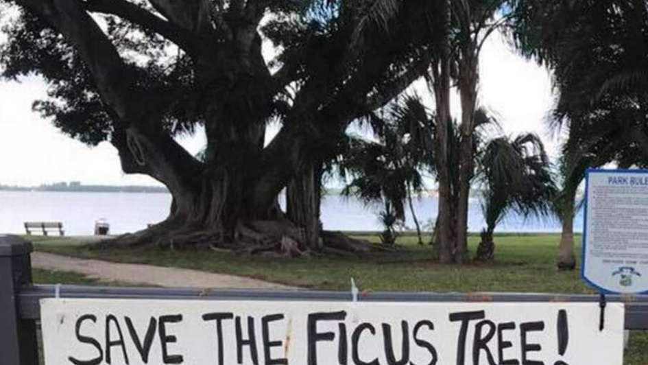 Mujer se casó con árbol para protegerlo de la tala