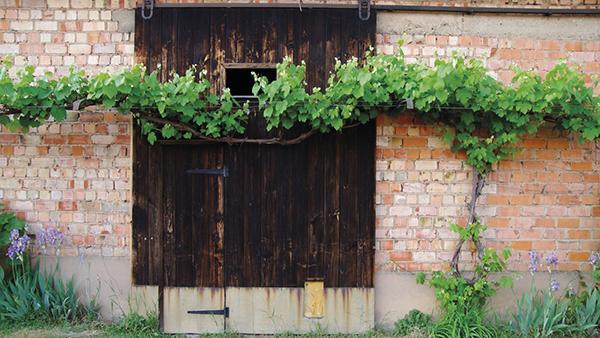 Cómo lograr un paisajismo comestible en tu jardín