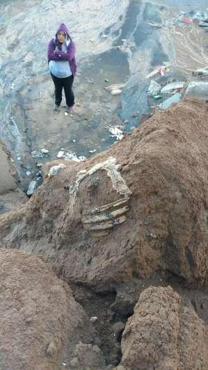Iban caminando por la playa y encontraron los restos de un perezoso de 3 millones de años