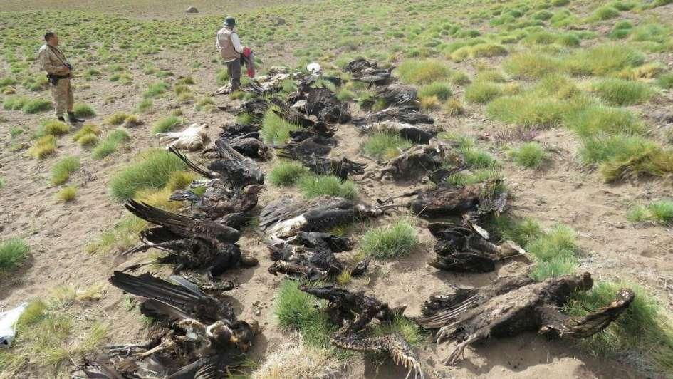 Gabriela Klier: ¿qué se pierde cuando se muere un cóndor?