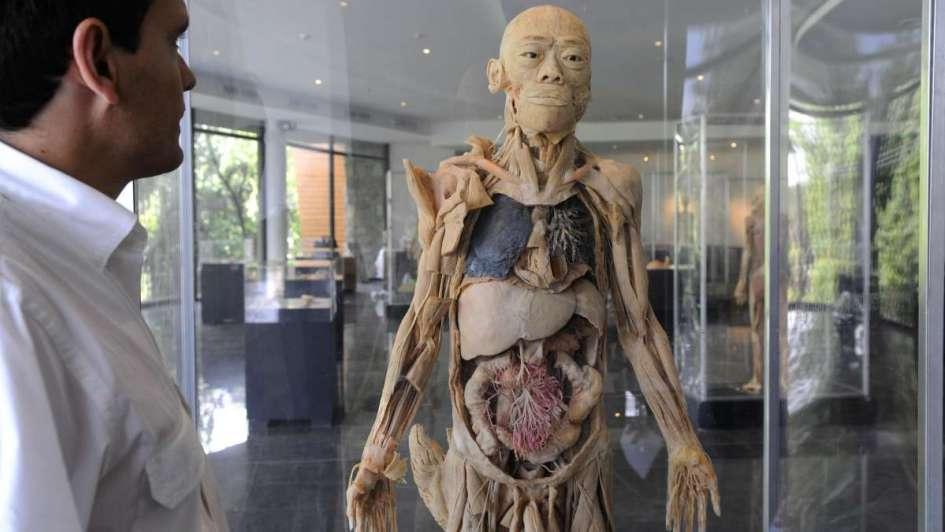 Describen un nuevo órgano en el cuerpo humano