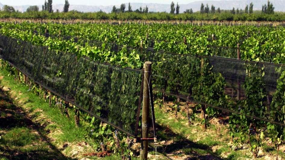 El Gobierno presentó en San Rafael el Programa de Mejora Competitiva frutícola