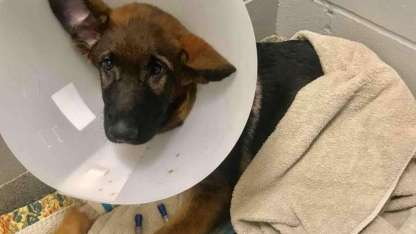 Atlas había sido maltratado en al menos dos ocasiones durante un lapso de seis semanas.