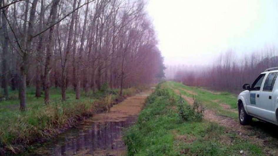Plantaciones forestales crecen 30% bajo riego