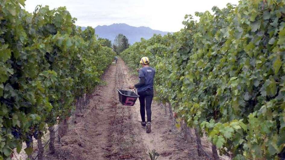 Cómo la agricultura biodinámica eleva la vitalidad de los cultivos