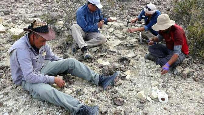 Hallan una importante cantidad de restos paleontológicos en La Pampa