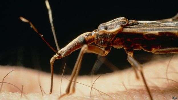 La enfermedad de Chagas puede y debe tratarse