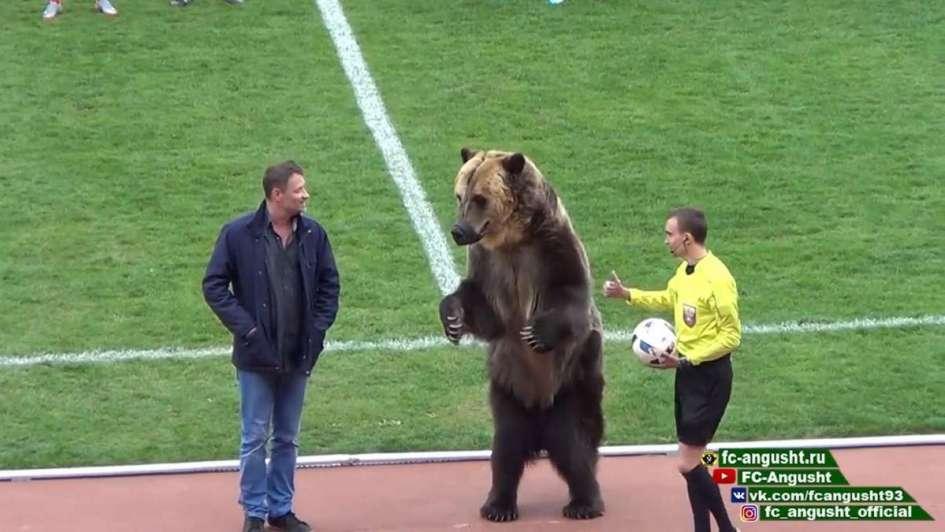 YouTube: oso realizó 'play de honor' en partido de fútbol en Rusia