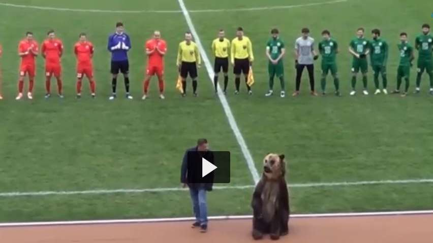Oso hace el saque de honor en el fútbol ruso