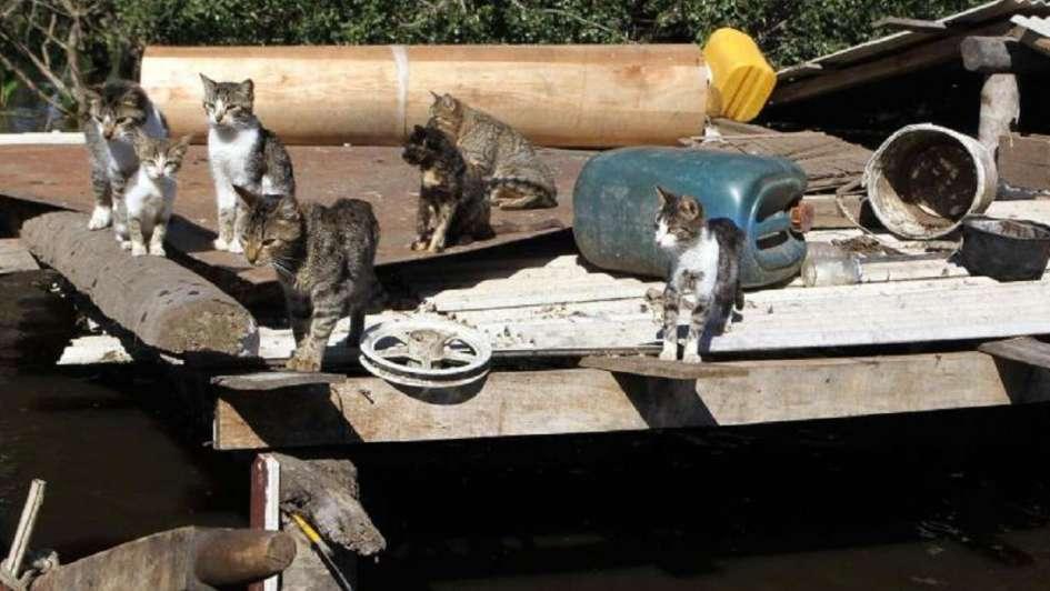 Usaban gatos para entrar celulares y cargadores a la cárcel — Insólito