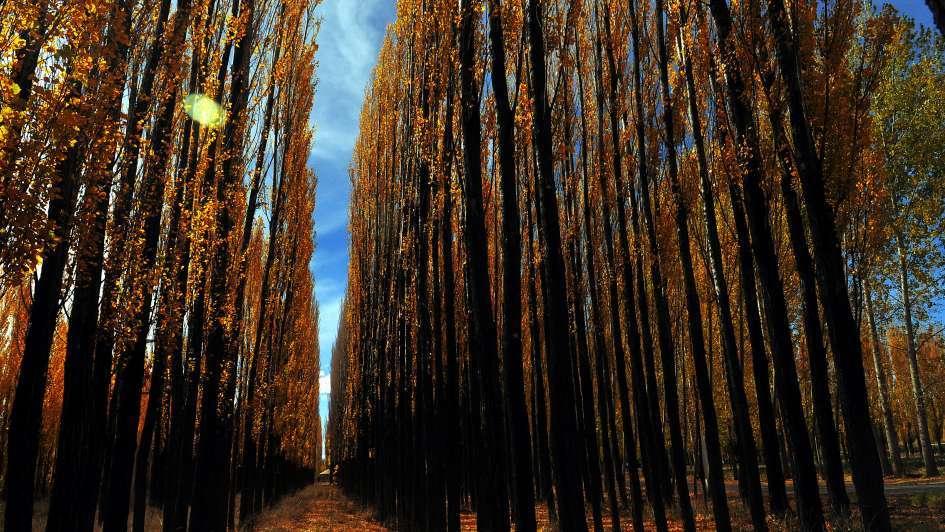 El tiempo en Mendoza: se espera una máxima de 28°C