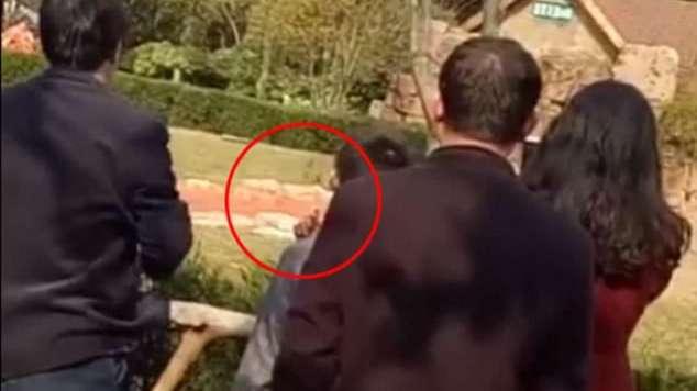 Mataron a ladrillazos a un canguro en un zoológico de China