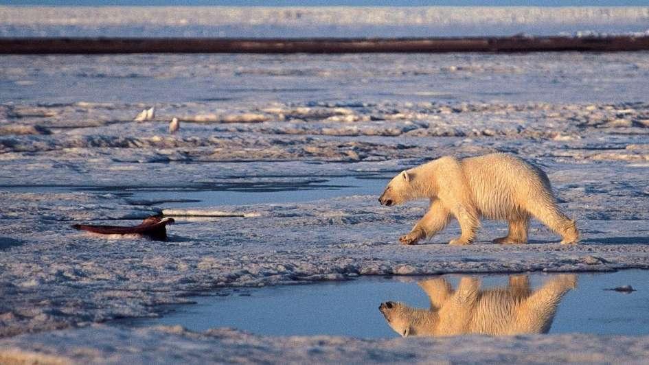 Un investigador mendocino de la UNCuyo participó de un importante hallazgo en el Ártico