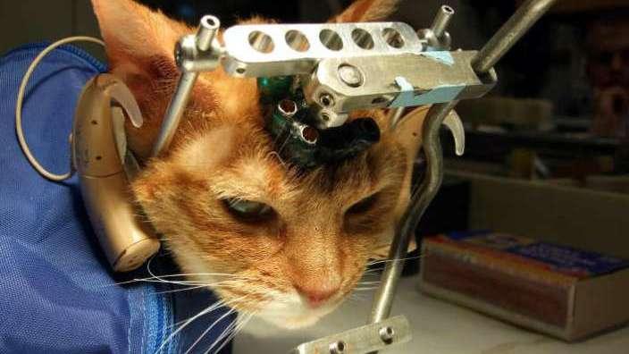 Animales: los mitos detrás de la experimentación