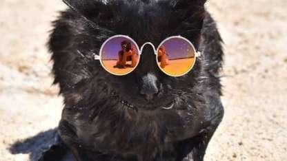 """La """"gatita acuática"""" que conquista Instagram y es la nueva reina de las redes"""