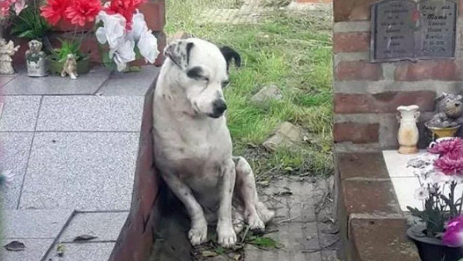 ¡POBRECITO! Le buscan familia a un perro que no se despega de la tumba de su dueño