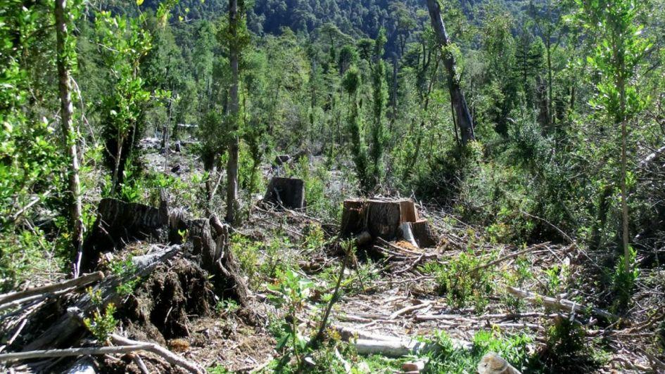 La deforestación de la Amazonia
