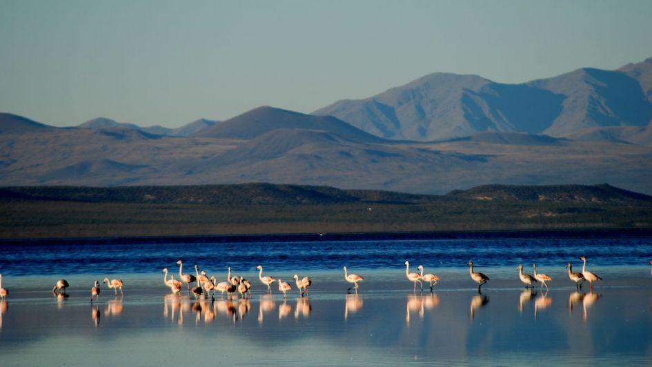 El valor de Llancanelo en la  región seca del oeste