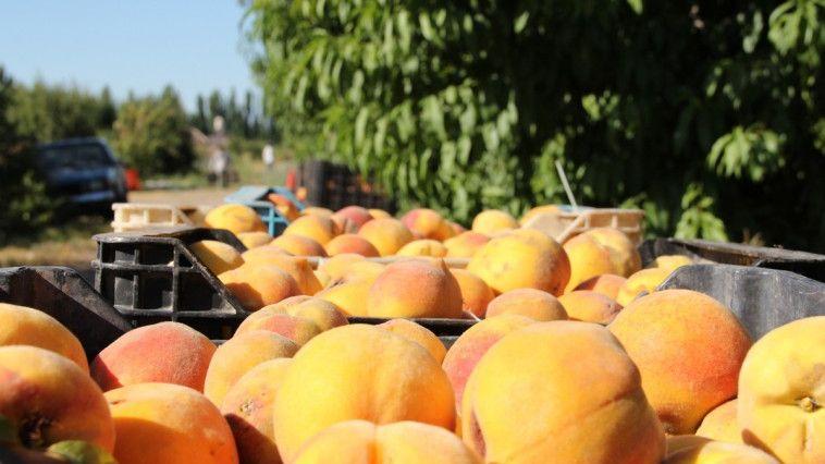 Más de 280 productores buscan mejorar sus montes frutales