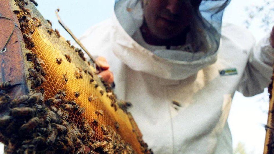 Cambios para las salas de extracción de miel