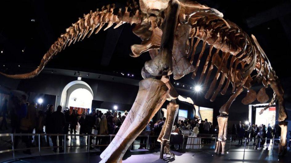 El dinosaurio más grande viaja de chubut a chicago