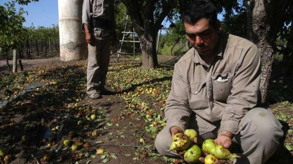 Moratoria para los productores de pera y manzana