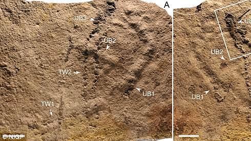 Encontraron las huellas de animal más antiguas de la Tierra