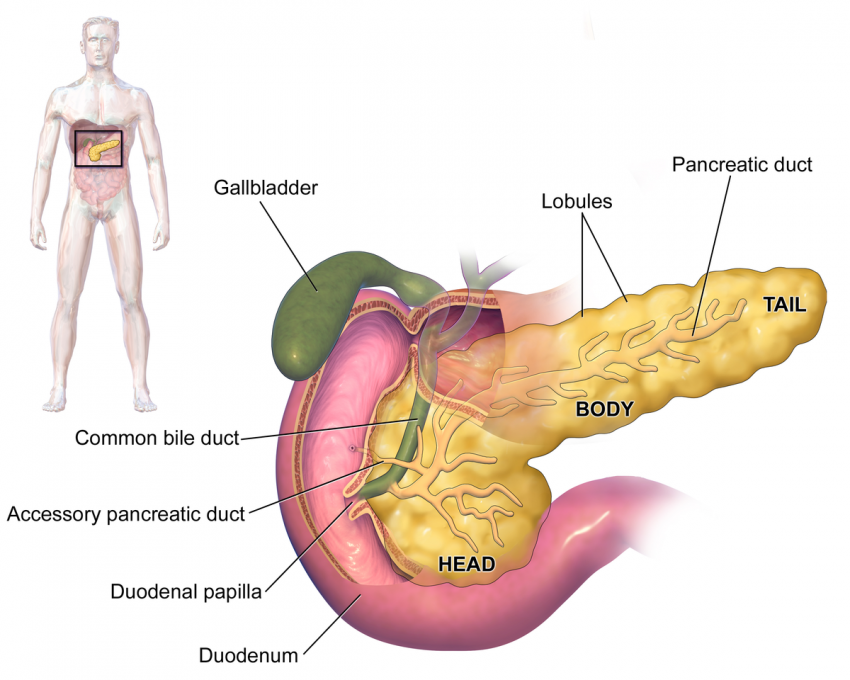 Cabeza llena de páncreas