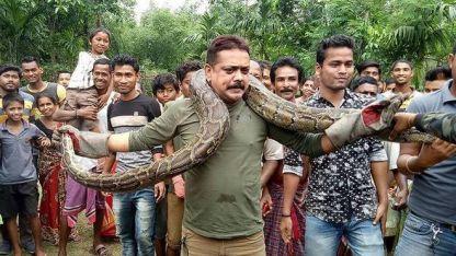 La serpiente se enrolló en su cuello y el hombre tuvo que batirse para deshacer ese abrazo que podría ser mortal.
