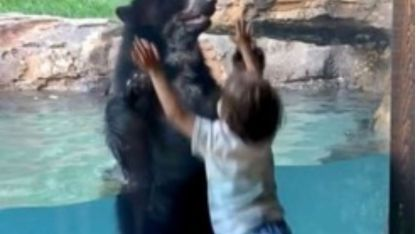 El tierno video de un oso que salta con un nene y se volvió viral