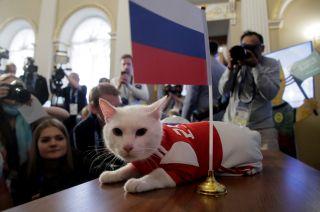 El gato Aquiles fue designado como 'adivino oficial' del Mundial de Rusia-2018.