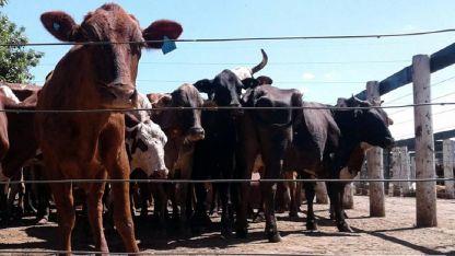China representa el 50% del volumen total de las exportaciones argentinas de carne bovina.
