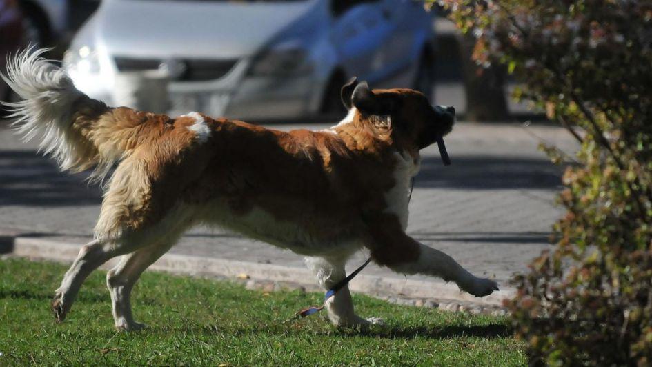 Los que no levanten la caca de sus perros pueden ser multados hasta con 12 mil pesos