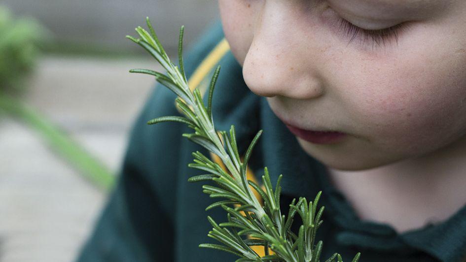 Jardines para los sentidos y la diversión