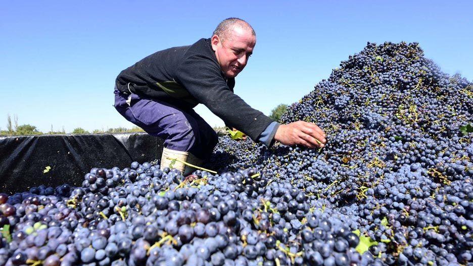Ante un nuevo contexto vitivinícola - Por Eduardo Córdoba