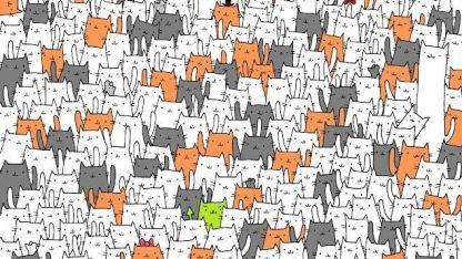 Desafío viral que enloquece: ¿podés ver al conejo escondido entre los gatitos?