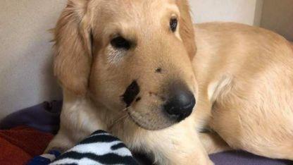 El perro que salvó a su dueña de ser mordida por una serpiente venenosa