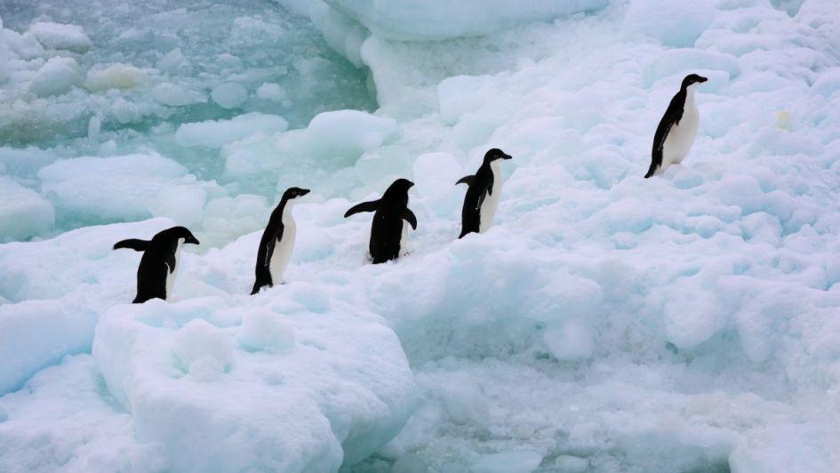 Antártida rompe récord de la temperatura más fría: -98.6 ºC