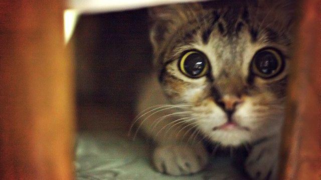 Un gato que había metido la cola en una hornalla incendió una casa en Santa Fe
