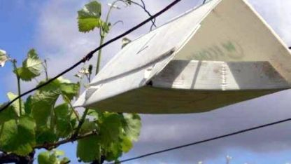 Fue detectada en la provincia de Mendoza por primera vez en 2010.