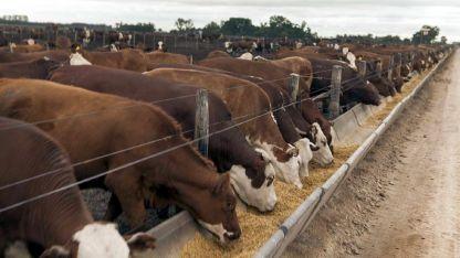 En Argentina 63% de las vacas desteta un ternero por año.