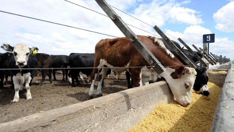 Comederos inteligentes  evalúan la conducta de las vacas