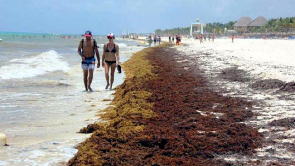 El sargazo tiene en jaque a varias playas del Caribe