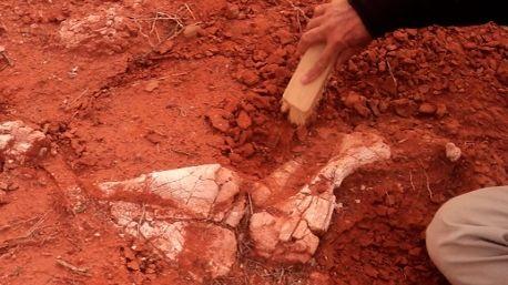 Descubrieron en San Juan restos del dinosaurio gigante más antiguo que habitó la Tierra