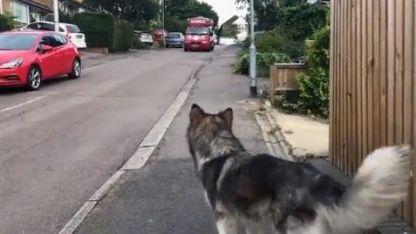 El perro que espera al carrito de los helados conquistó Twitter