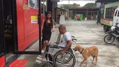 Un perro se volvió viral tras ayudar a su dueño a empujar la silla de ruedas