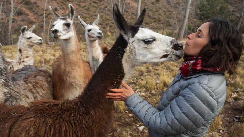 Emocionante video: así los animales del zoo mendocino dejaban las jaulas
